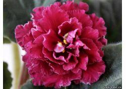 цветок огни москвы фото
